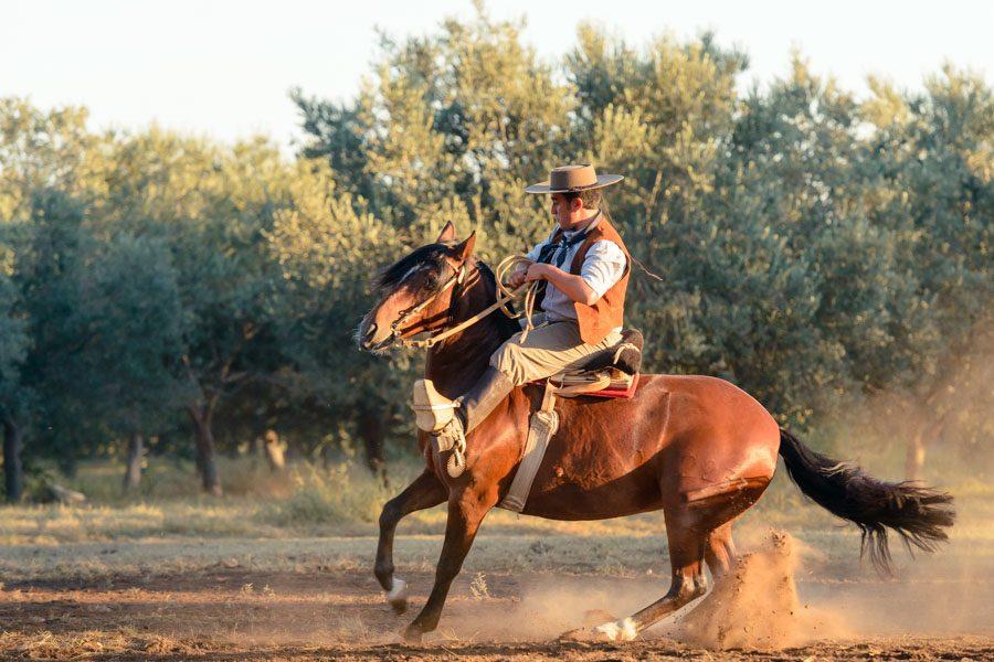 cabaña caballos criollos